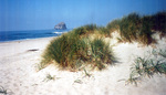 Coastline at Bob Straub State Park by Robert W. Straub Scrapbook